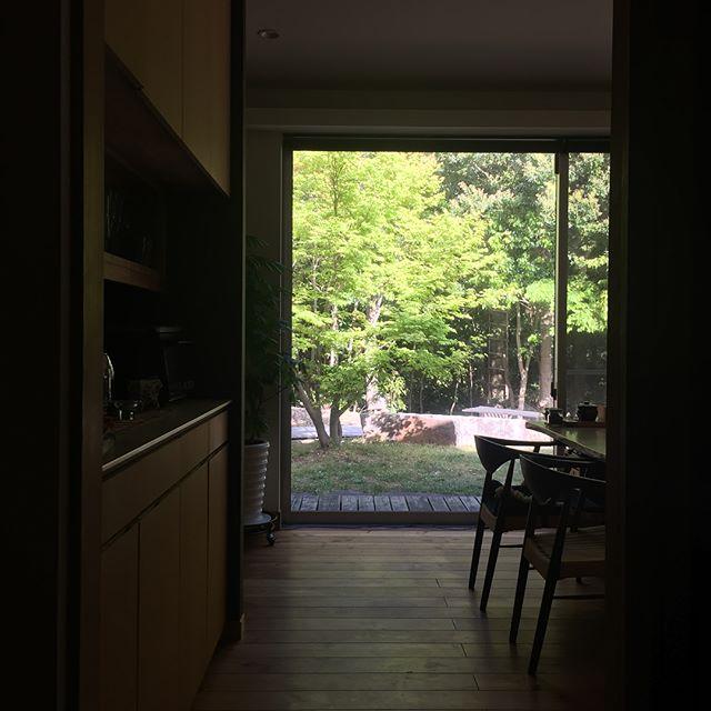 自邸ダイニングからの眺め。紅葉の新緑を感じながらの朝ごはんは格別です。#庭 #建築 #住宅 #ダイニング #新緑 #窓 #ピクチャーウィンドウ #green #garden
