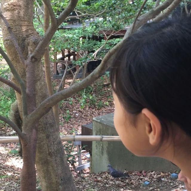 リスに興奮する浜松城公園にて。散歩道があり、とても気持ちよく1時間散歩出来ました。#リス #浜松城公園 #休日