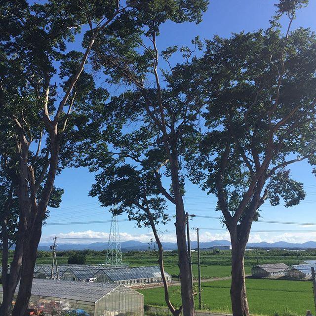 竹藪が伐採され眺望が良くなりました。富士山も望める良い場所です。これから基礎工事が始まります。磐田市にて。#眺望 #富士山 #磐田市 #注文住宅 #ラグデザイン #サロンのある家