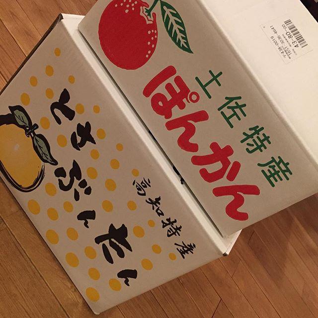この季節がやって来ました!大好きな文旦&ぽんかん。矢野農園さんはとても美味しいですよ!かれこれ、10年以上のお付き合いです。#矢野農園 #文旦 #ぽんかん #長いお付き合い #冬の果実
