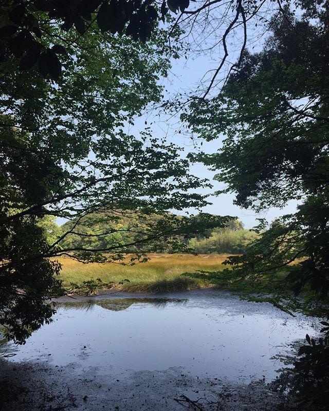 自然の美しさに感動。いつもより早く起床。自宅近くの鶴ヶ池ウォーキングコースにて。#鶴ヶ池 #磐田市 #ウォーキング #自然